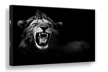 Canvas Lion Tavla