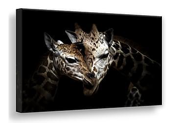 Wild Giraffes Tavla Canvas