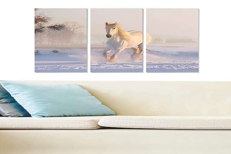 Tavla Animal 3-pack Flerfärgad - 20x50 cm - Heminredning - Väggdekor - Posters