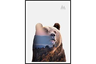 Bear Tavla
