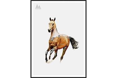 Horse Tavla