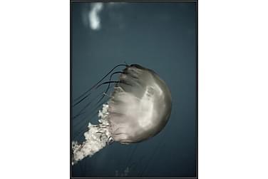Jellyfish Tavla