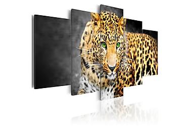 Tavla Green-Eyed Leopard 200x100