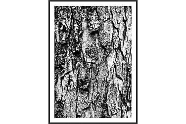 Träd Tavla