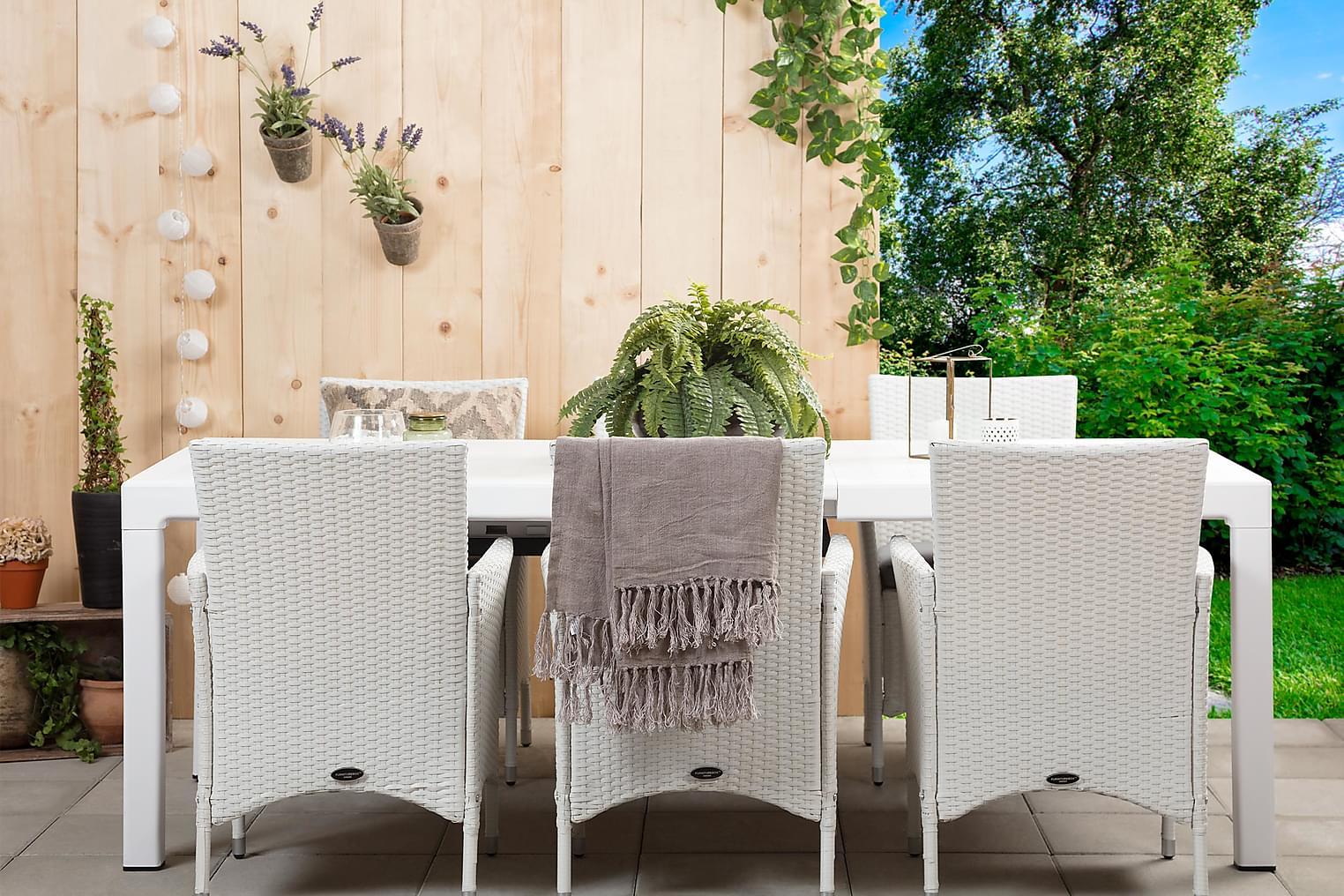 CAYMAN Pöytä 162 Valkoinen + 6 ARUBA Käsinojallista tuolia V